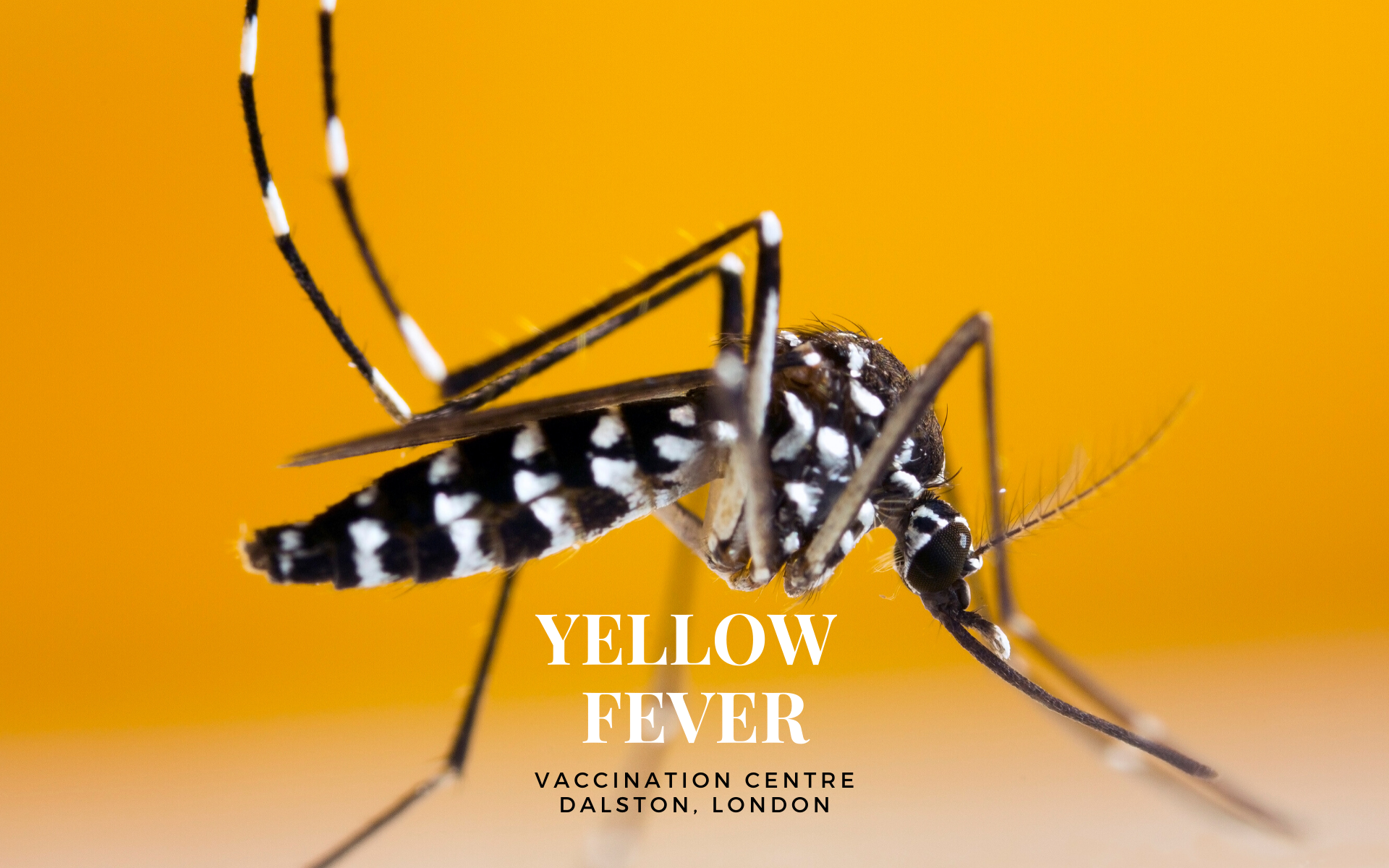 Yellow Fever Vaccination in Dalston, London